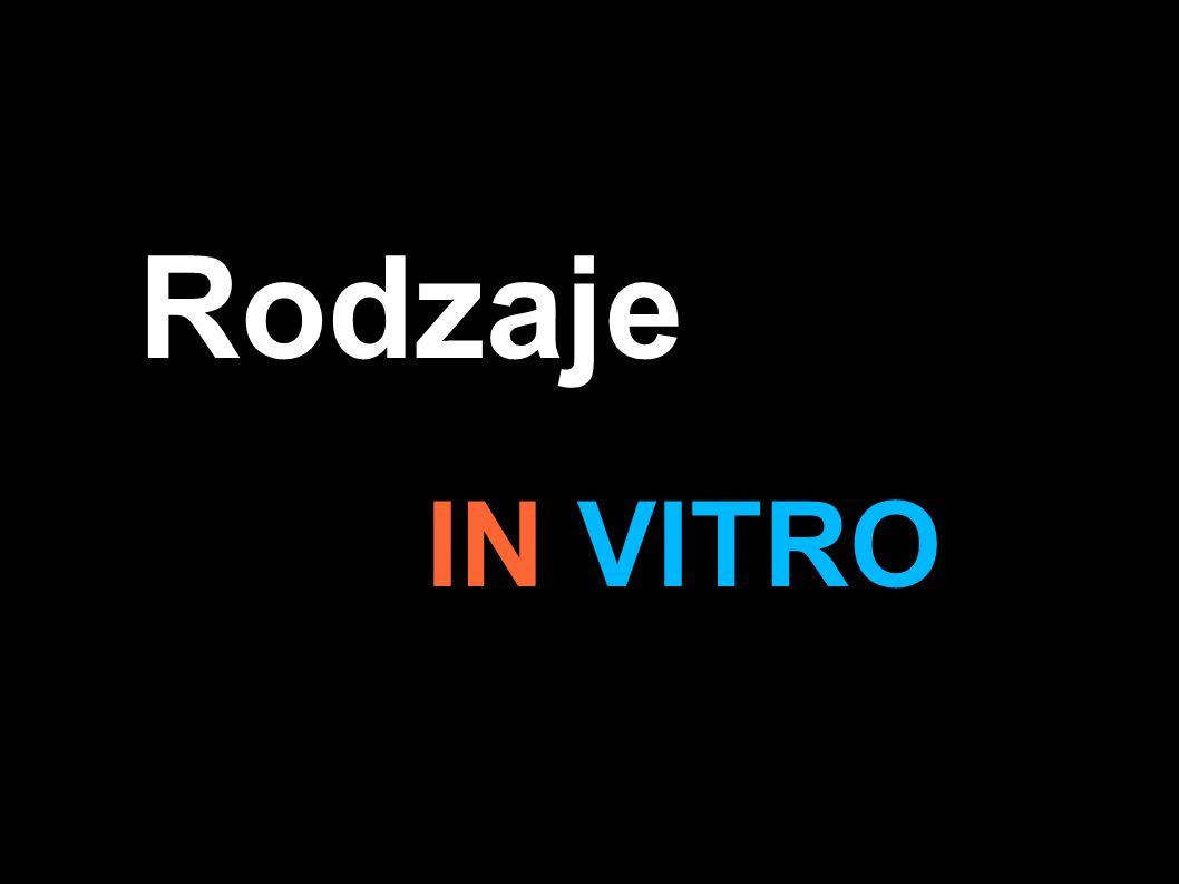 In vitro IVF-ET tzw klasyczne - Zapłodnienie zachodzi samoistnie na szalce, na której znajduje się mieszanina komórek jajowych i plemników.