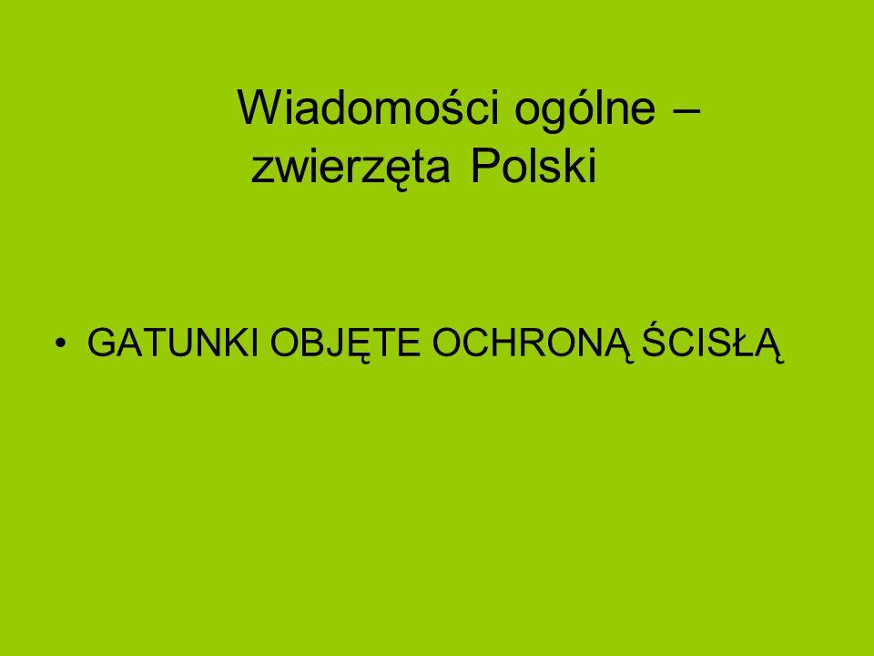 Wiadomości ogólne – zwierzęta Polski GATUNKI OBJĘTE OCHRONĄ ŚCISŁĄ