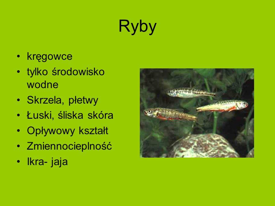 Ryby kręgowce tylko środowisko wodne Skrzela, płetwy Łuski, śliska skóra Opływowy kształt Zmiennocieplność Ikra- jaja