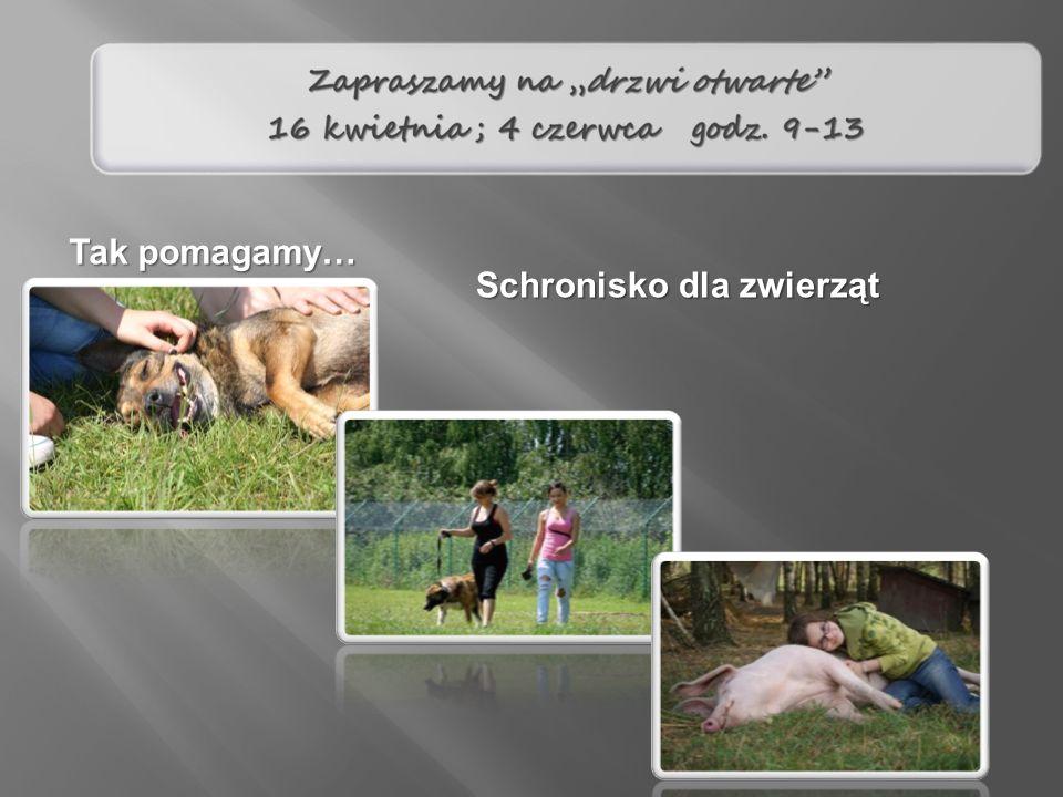 Tak pomagamy… Schronisko dla zwierząt