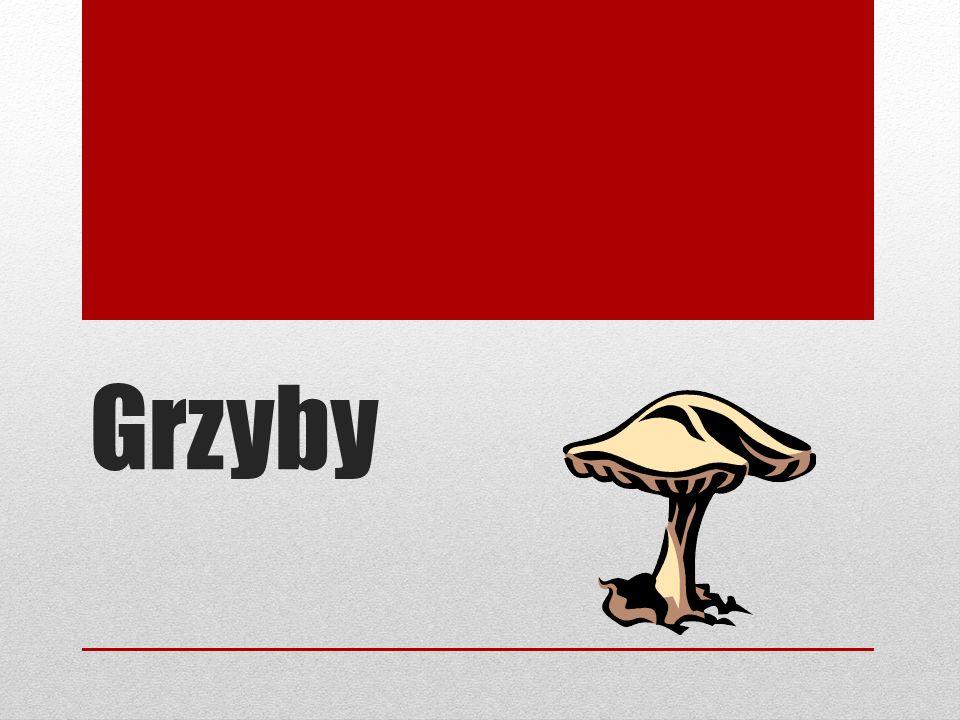 Číslo přílohy: VY_32_INOVACE_11_GRZYBY Škola: Autor: Základní škola a mateřská škola s polským jazykem vyučovacím Bukovec Mgr.