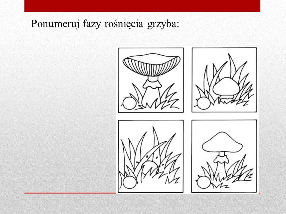 Ponumeruj fazy rośnięcia grzyba:
