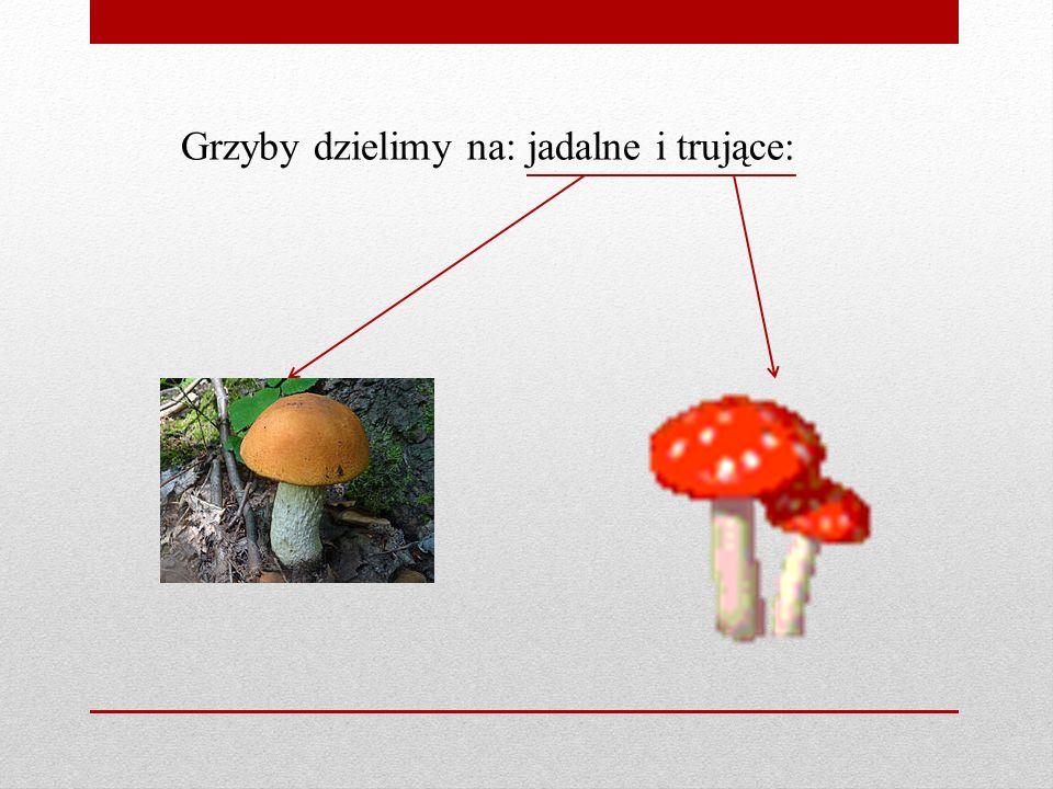 Borowik szlachetny Koźlarz czerwony Podgrzybek brunatny Grzyby jadalne: