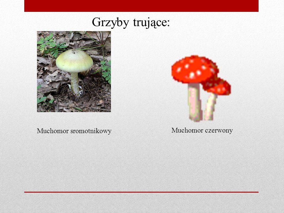 Co robimy i jak przechowujemy grzyby : suszenie zagotowanie zamrażanie przetwarzanie