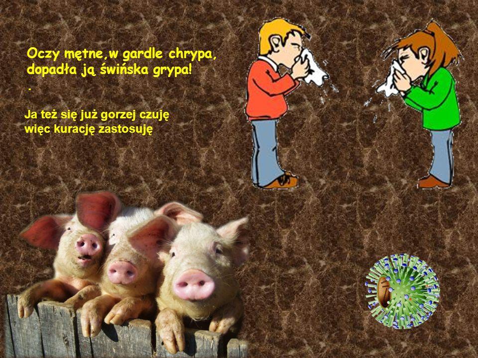 Oczy mętne,w gardle chrypa, dopadła ją świńska grypa!.