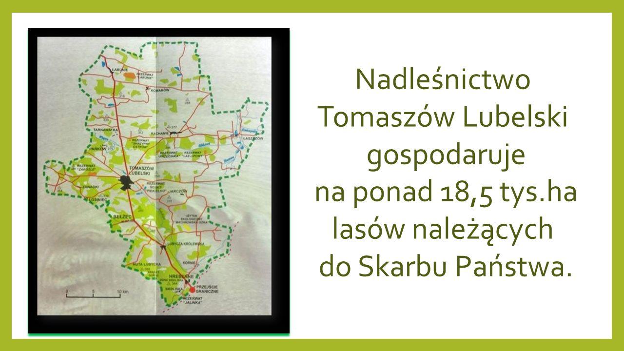 """Rezerwat geologiczny """"Piekiełko Rezerwat położony jest na terenie Roztocza Środkowego."""