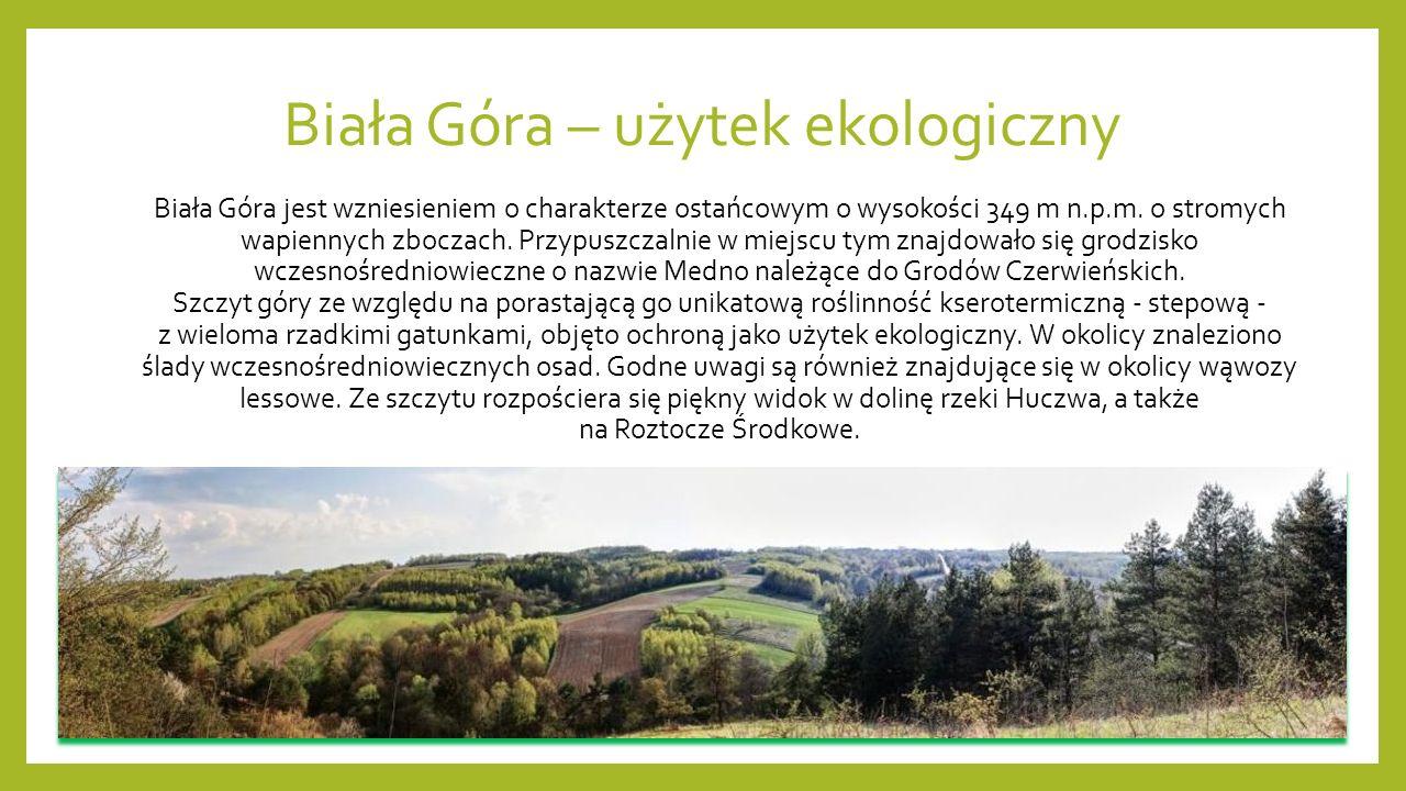 Biała Góra – użytek ekologiczny Biała Góra jest wzniesieniem o charakterze ostańcowym o wysokości 349 m n.p.m.