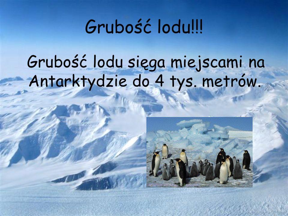 Grubość lodu!!! Grubość lodu sięga miejscami na Antarktydzie do 4 tys. metrów.