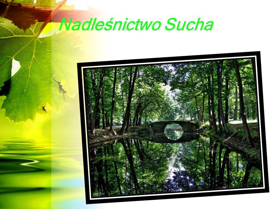 """Historia lasów w obrębie Suchej Beskidzkiej Lasy w obrębie Suchej wchodziły na początku w skład dóbr Żywieckich, a później część z nich stanowiła """"Państwo Suskie ."""