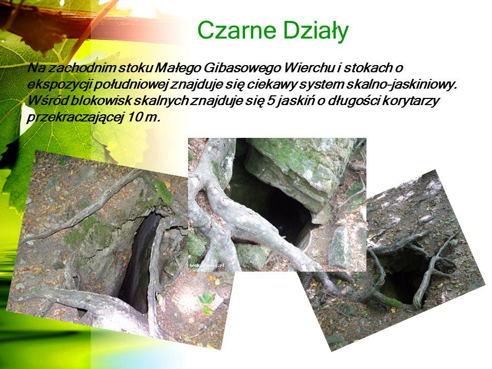 Czarne Działy Na zachodnim stoku Małego Gibasowego Wierchu i stokach o ekspozycji południowej znajduje się ciekawy system skalno-jaskiniowy.