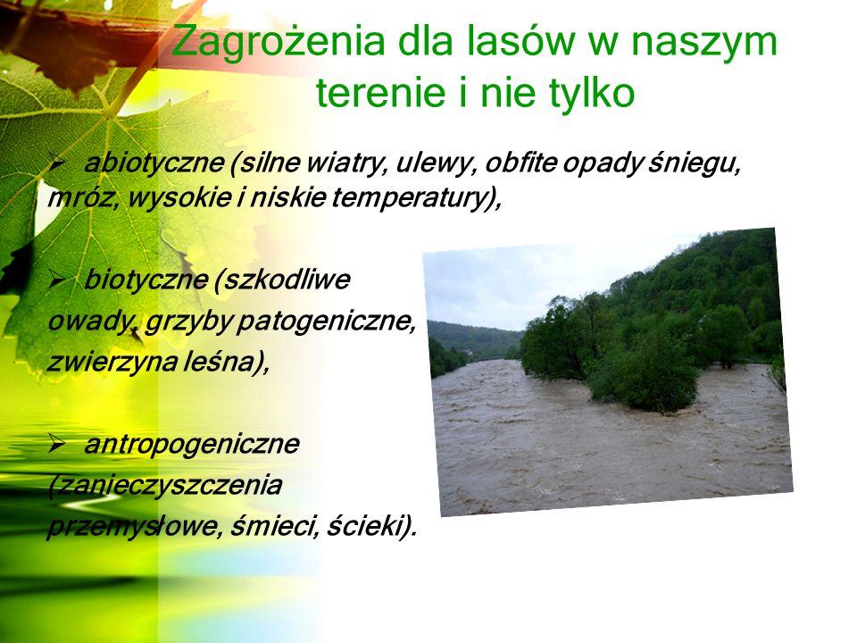 Zagrożenia dla lasów w naszym terenie i nie tylko  abiotyczne (silne wiatry, ulewy, obfite opady śniegu, mróz, wysokie i niskie temperatury),  biotyczne (szkodliwe owady, grzyby patogeniczne, zwierzyna leśna),  antropogeniczne (zanieczyszczenia przemysłowe, śmieci, ścieki).