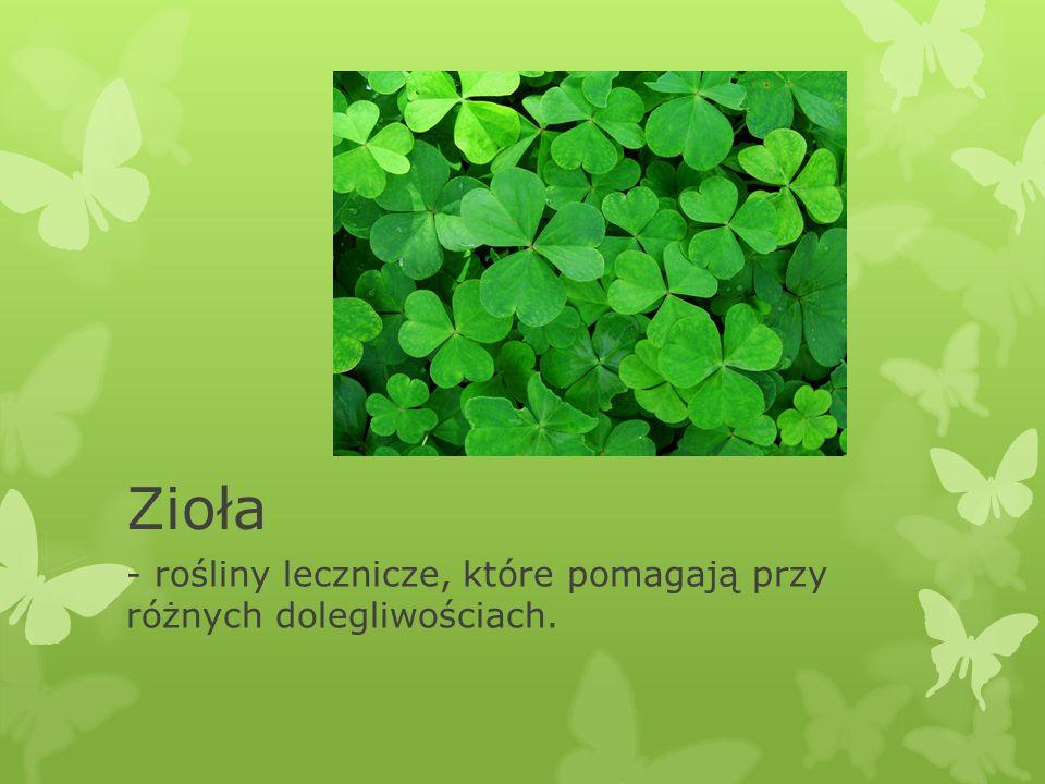 Zioła - rośliny lecznicze, które pomagają przy różnych dolegliwościach.