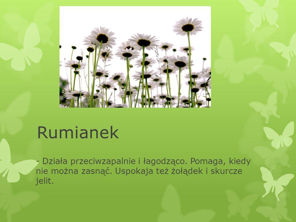 Rumianek - Działa przeciwzapalnie i łagodząco. Pomaga, kiedy nie można zasnąć. Uspokaja też żołądek i skurcze jelit.