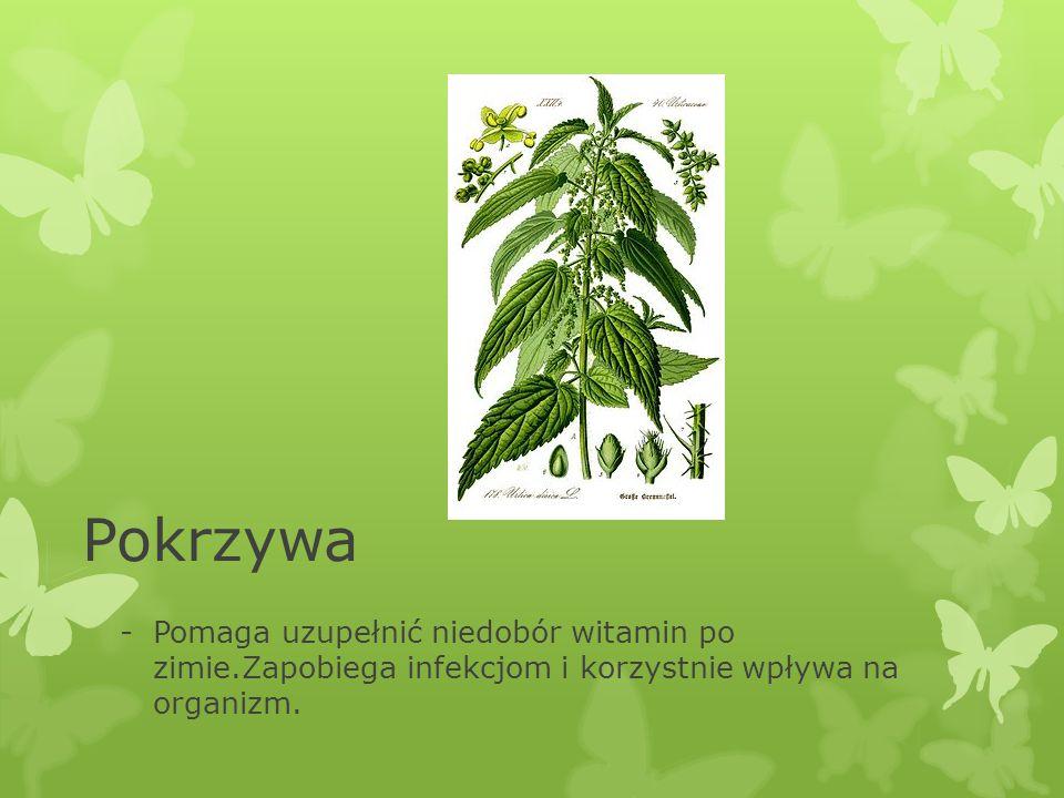Pokrzywa -Pomaga uzupełnić niedobór witamin po zimie.Zapobiega infekcjom i korzystnie wpływa na organizm.