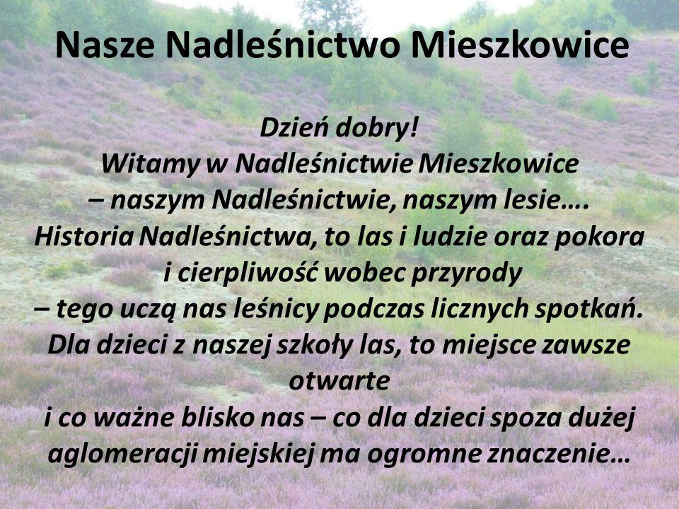 Nasze Nadleśnictwo Mieszkowice Dzień dobry.