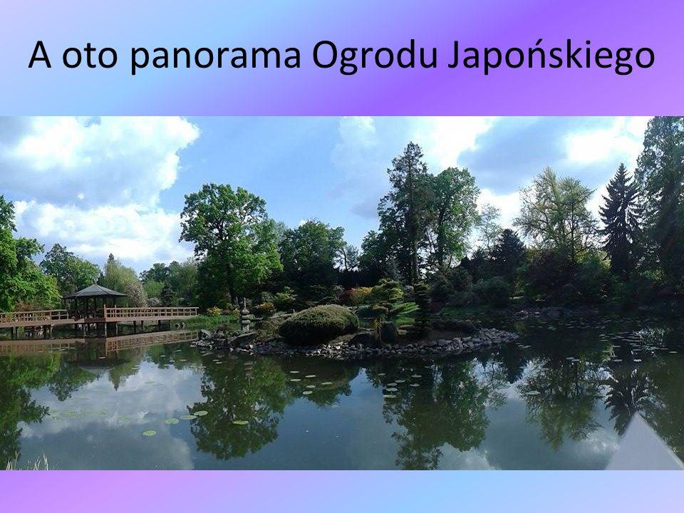 A oto panorama Ogrodu Japońskiego