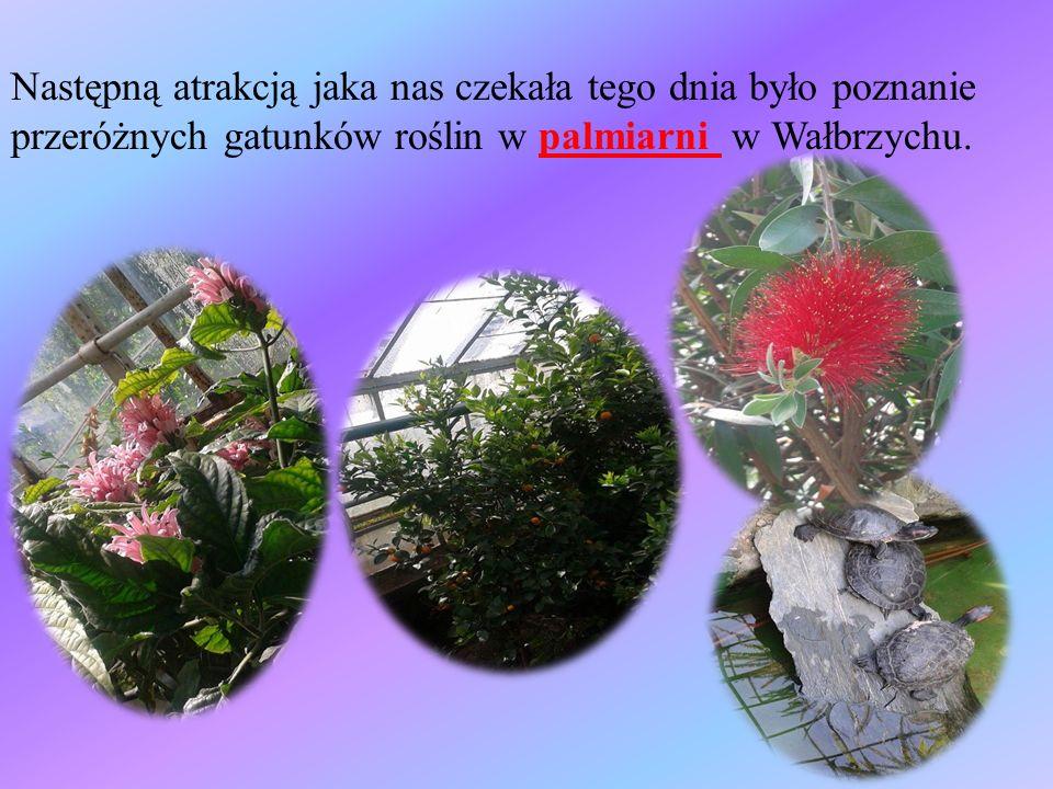 Następną atrakcją jaka nas czekała tego dnia było poznanie przeróżnych gatunków roślin w palmiarni w Wałbrzychu.