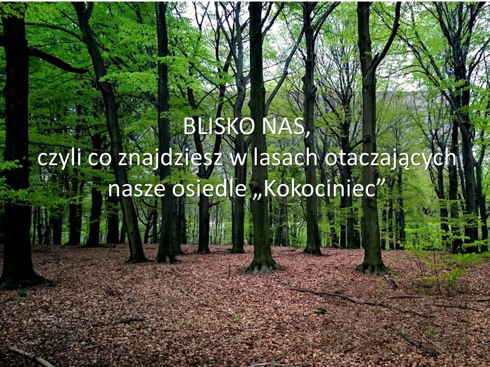 """BLISKO NAS, czyli co znajdziesz w lasach otaczających nasze osiedle """"Kokociniec"""