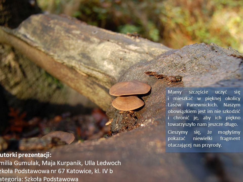 Mamy szczęście uczyć się i mieszkać w pięknej okolicy Lasów Panewnickich.
