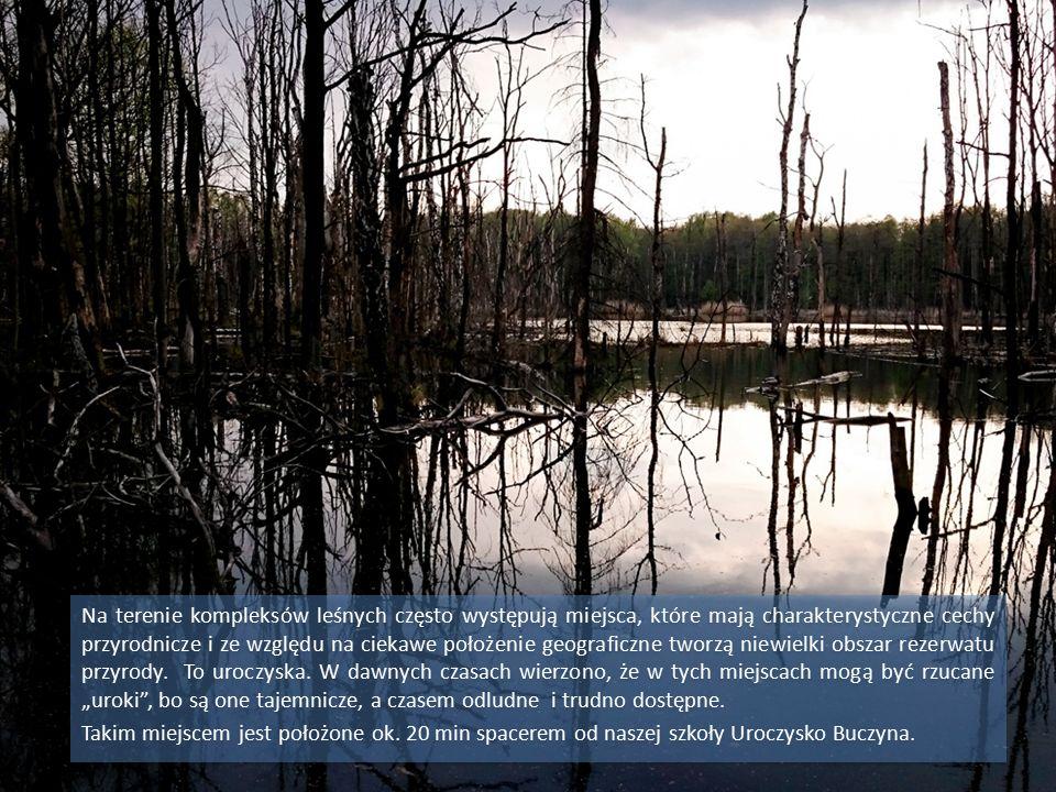 Na terenie kompleksów leśnych często występują miejsca, które mają charakterystyczne cechy przyrodnicze i ze względu na ciekawe położenie geograficzne tworzą niewielki obszar rezerwatu przyrody.