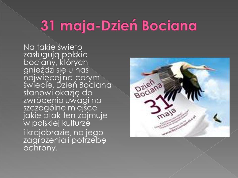 Na takie święto zasługują polskie bociany, których gnieździ się u nas najwięcej na całym świecie.
