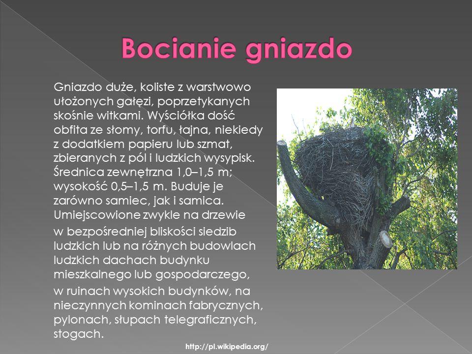 Gniazdo duże, koliste z warstwowo ułożonych gałęzi, poprzetykanych skośnie witkami.
