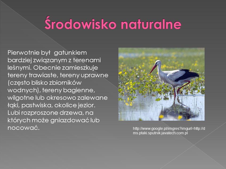 Pierwotnie był gatunkiem bardziej związanym z terenami leśnymi.