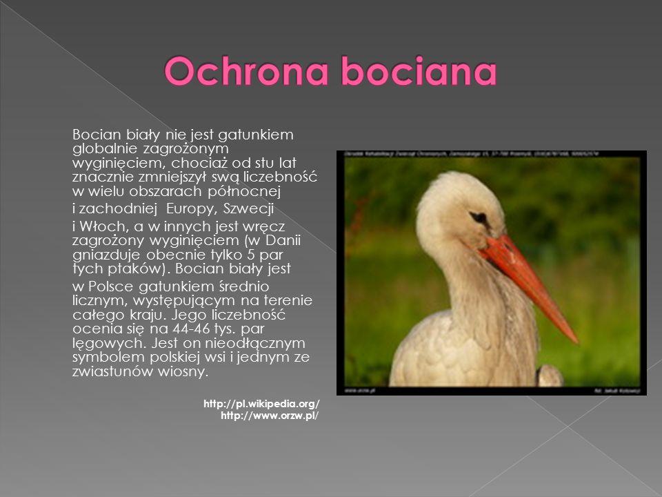 Bocian biały nie jest gatunkiem globalnie zagrożonym wyginięciem, chociaż od stu lat znacznie zmniejszył swą liczebność w wielu obszarach północnej i zachodniej Europy, Szwecji i Włoch, a w innych jest wręcz zagrożony wyginięciem (w Danii gniazduje obecnie tylko 5 par tych ptaków).