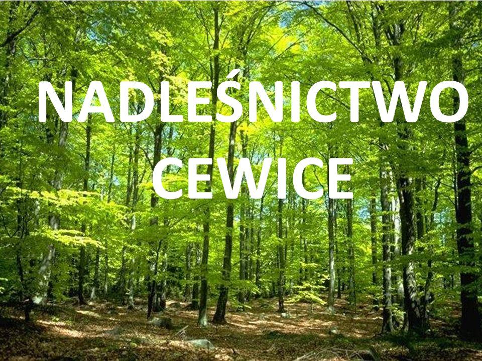 Nadleśnictwo Cewice w obecnych granicach utworzono w 1984 roku.