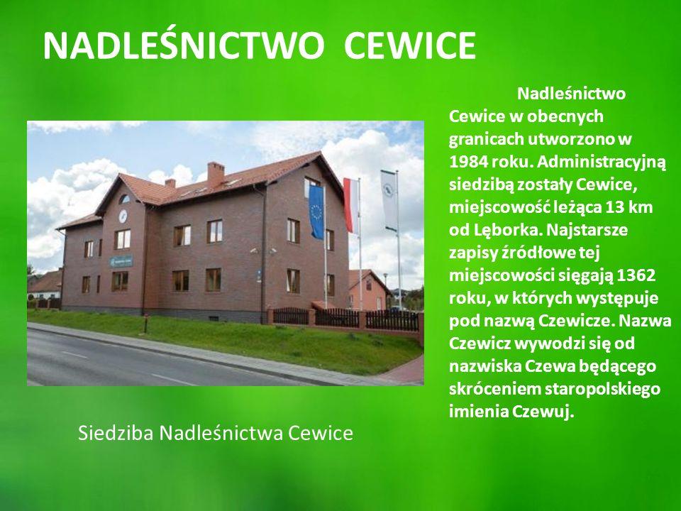 HISTORIA NADLEŚNICTWA CEWICE Obecne granice Nadleśnictwa Cewice obowiązują od 1984 r.