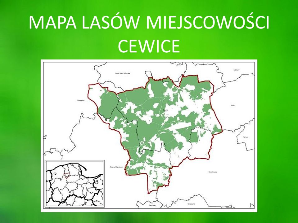 PRACA W LESIE Jednym z podstawowych zabiegów wykonywanych w lasach przez Leśników są trzebieże.