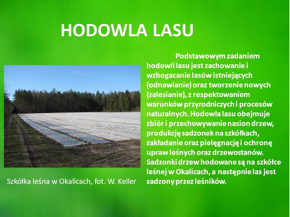 Podstawowym zadaniem hodowli lasu jest zachowanie i wzbogacanie lasów istniejących (odnawianie) oraz tworzenie nowych (zalesianie), z respektowaniem warunków przyrodniczych i procesów naturalnych.