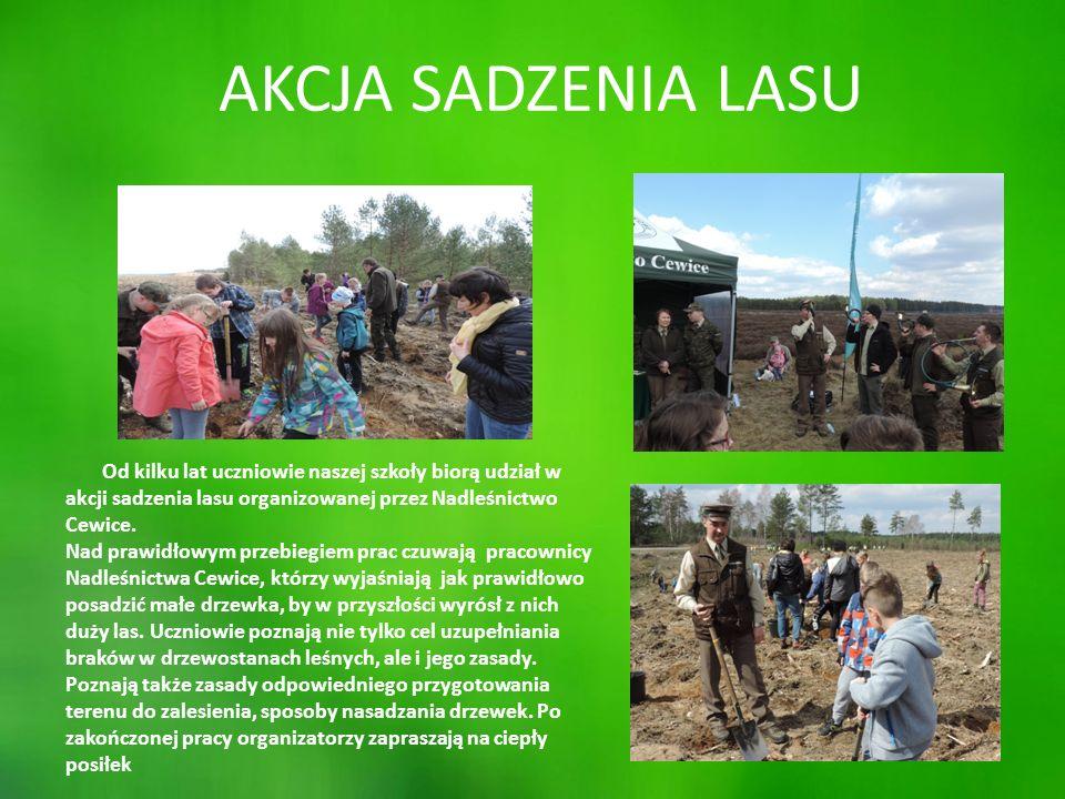 AKCJA SADZENIA LASU Od kilku lat uczniowie naszej szkoły biorą udział w akcji sadzenia lasu organizowanej przez Nadleśnictwo Cewice.