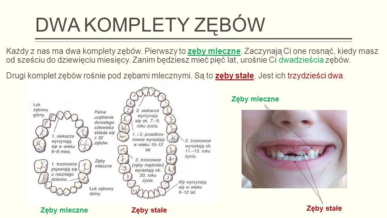 DWA KOMPLETY ZĘBÓW Każdy z nas ma dwa komplety zębów.