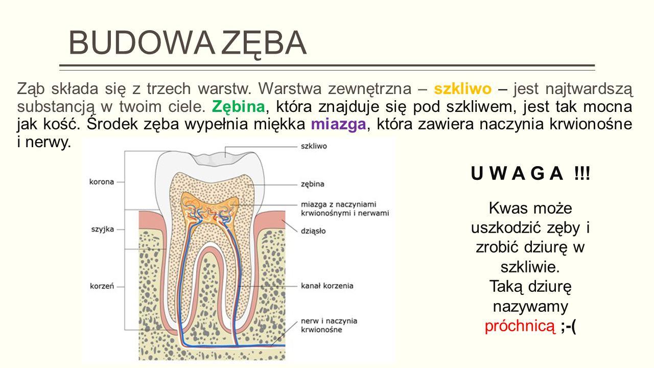 BUDOWA ZĘBA Ząb składa się z trzech warstw.