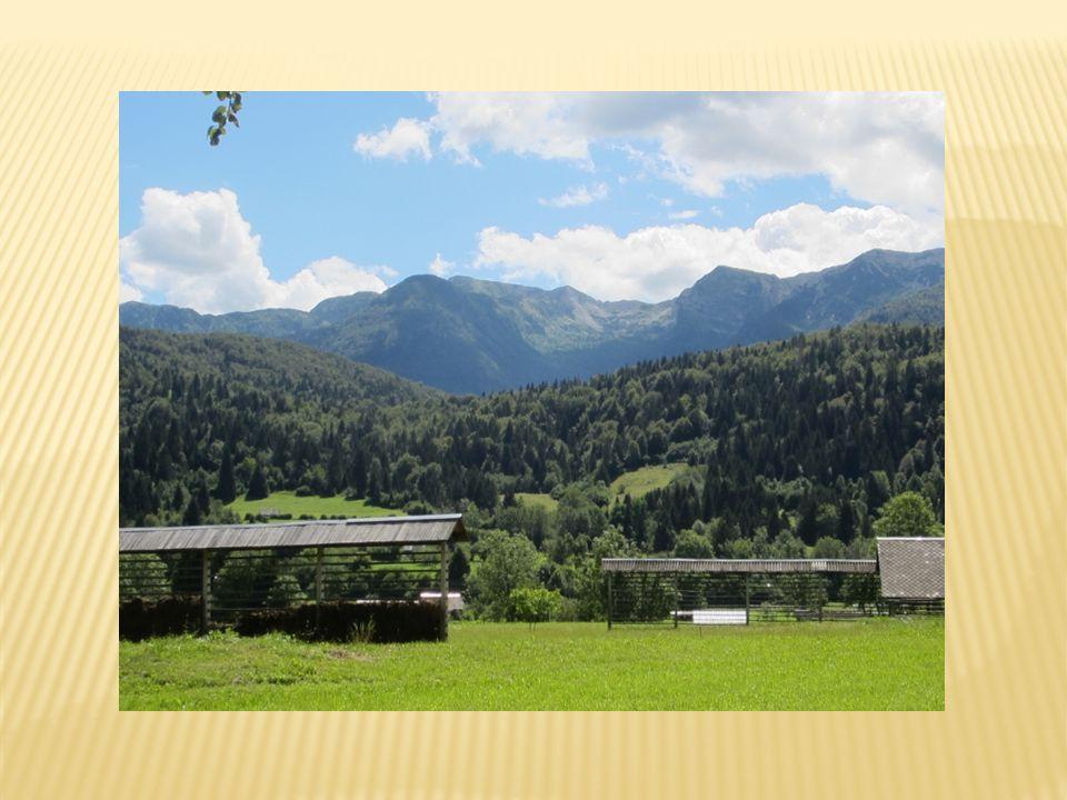 Przyjazd godz.14:00 nad Jezioro Bohijnskie, Koča pri Savici  Przejście doliną Siedmiu Triglavskich Jezior  Nocleg w schronisku Koča při Triglav.