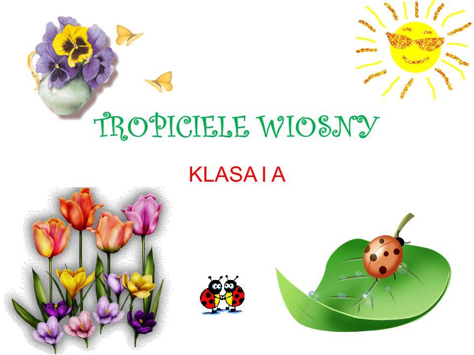 TROPICIELE WIOSNY KLASA I A