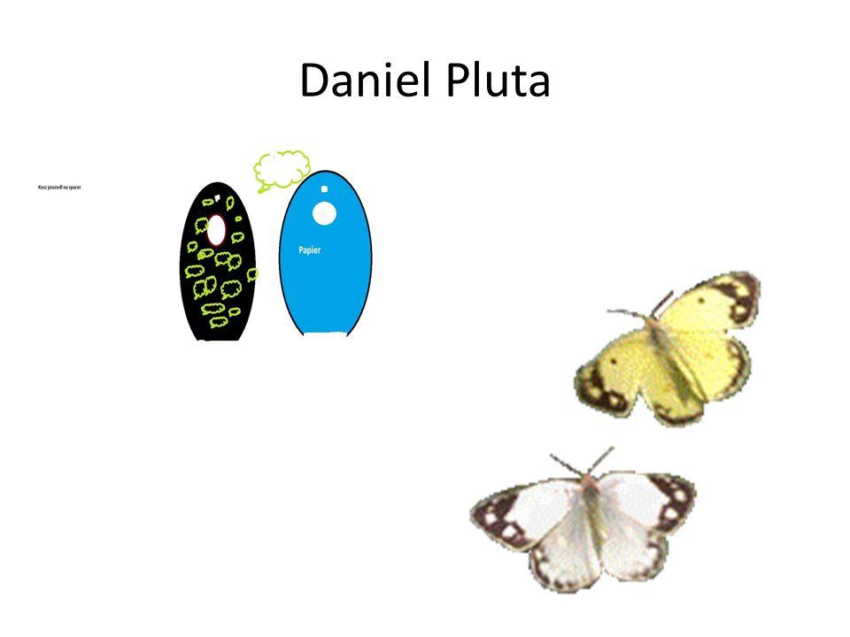 Daniel Pluta