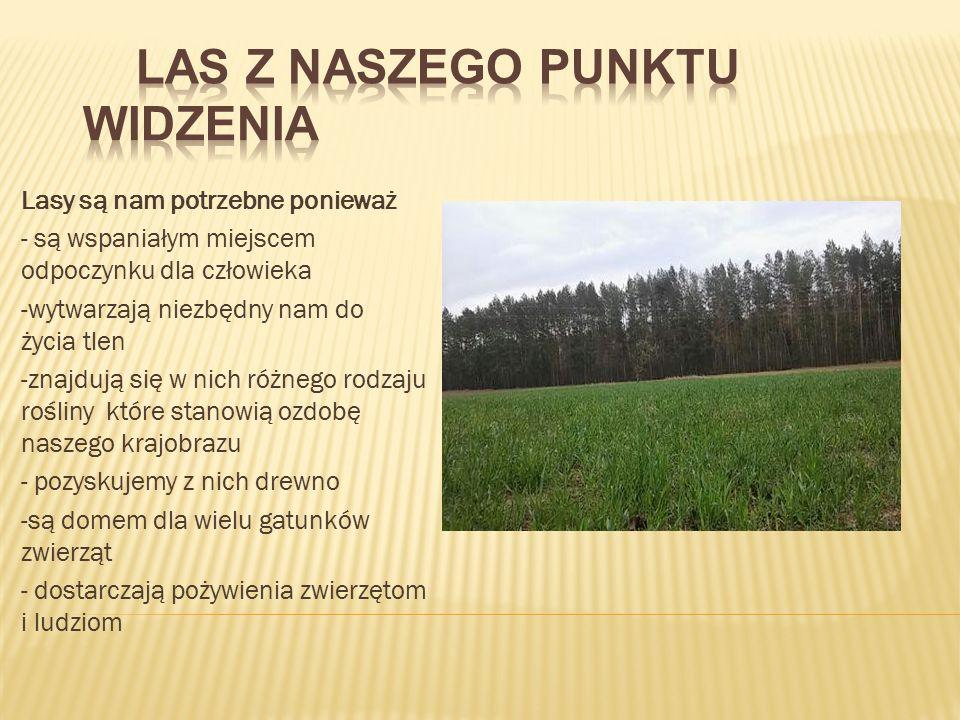 Cechą charakterystyczną tego regionu jest brak drzewostanów bukowych, jodłowych oraz fragmentaryczny udział świerka.