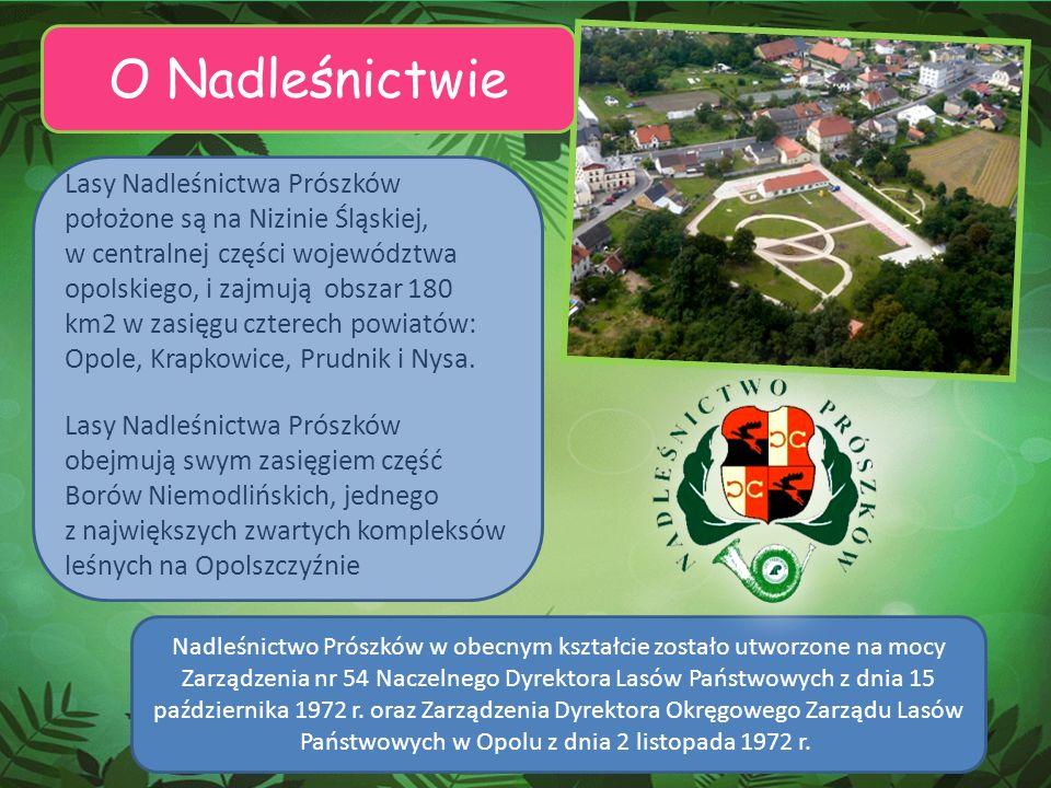 O Nadleśnictwie Lasy Nadleśnictwa Prószków położone są na Nizinie Śląskiej, w centralnej części województwa opolskiego, i zajmują obszar 180 km2 w zas