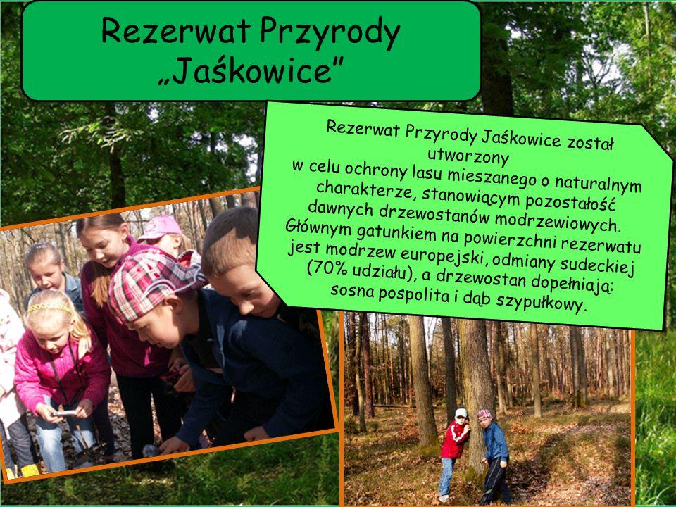 """Rezerwat Przyrody """"Jaśkowice"""" Rezerwat Przyrody Jaśkowice został utworzony w celu ochrony lasu mieszanego o naturalnym charakterze, stanowiącym pozost"""