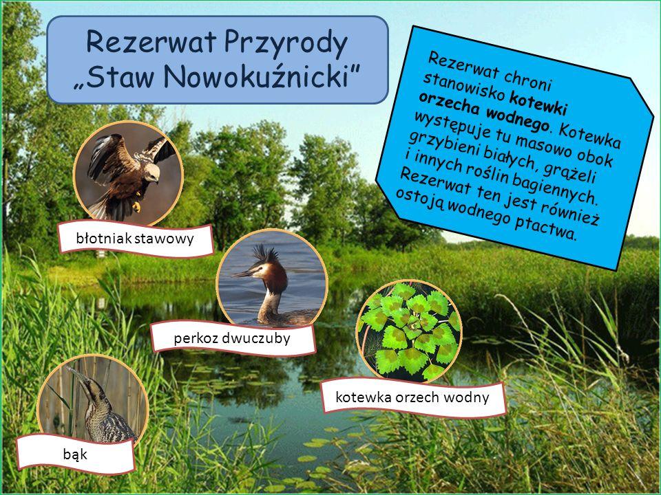 Rezerwat chroni stanowisko kotewki orzecha wodnego. Kotewka występuje tu masowo obok grzybieni białych, grążeli i innych roślin bagiennych. Rezerwat t