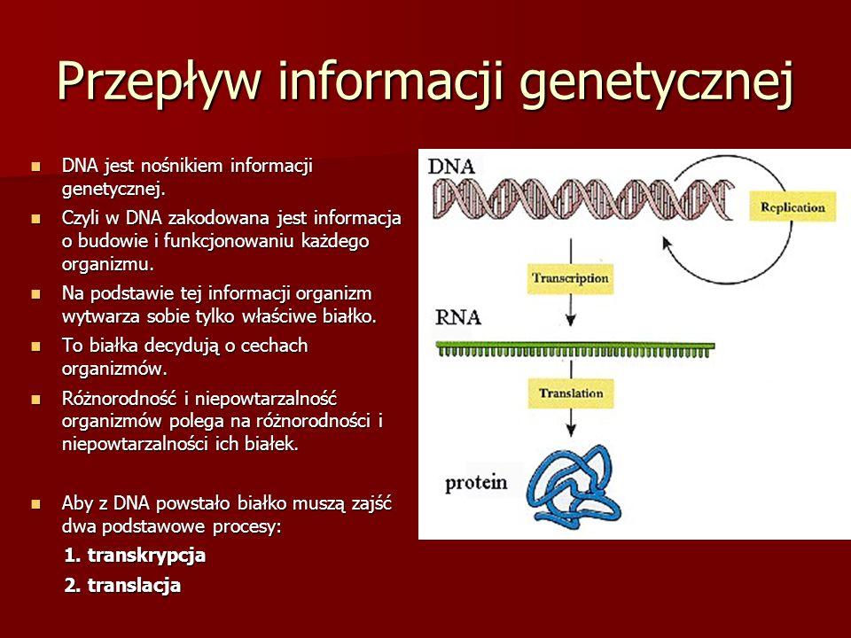 Przepływ informacji genetycznej DNA jest nośnikiem informacji genetycznej. DNA jest nośnikiem informacji genetycznej. Czyli w DNA zakodowana jest info