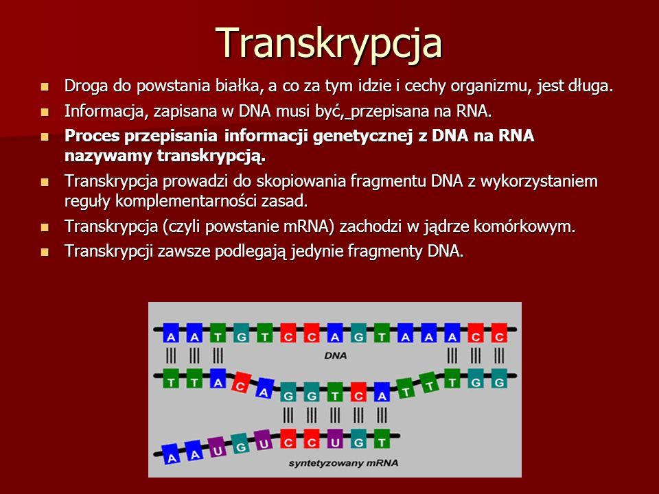 Transkrypcja Droga do powstania białka, a co za tym idzie i cechy organizmu, jest długa. Droga do powstania białka, a co za tym idzie i cechy organizm