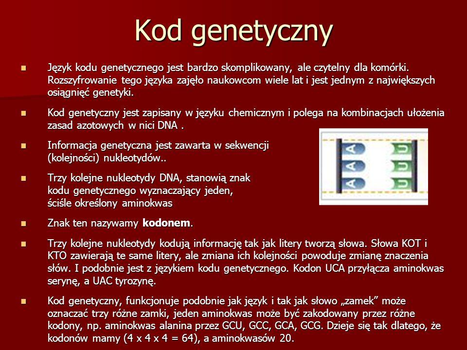Kod genetyczny Język kodu genetycznego jest bardzo skomplikowany, ale czytelny dla komórki. Rozszyfrowanie tego języka zajęło naukowcom wiele lat i je