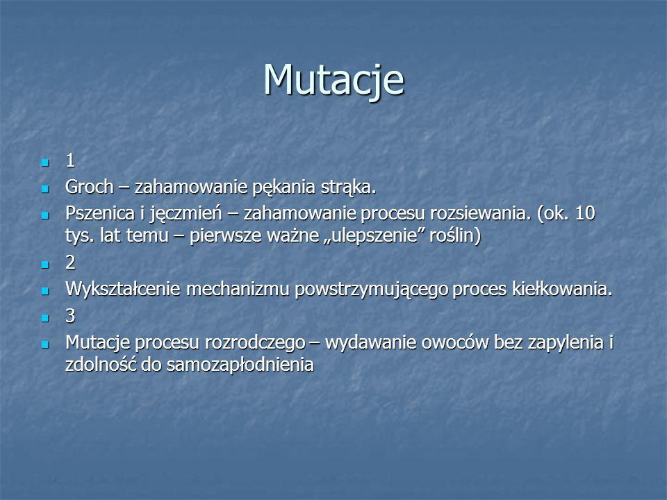 Mutacje 1 Groch – zahamowanie pękania strąka. Groch – zahamowanie pękania strąka.