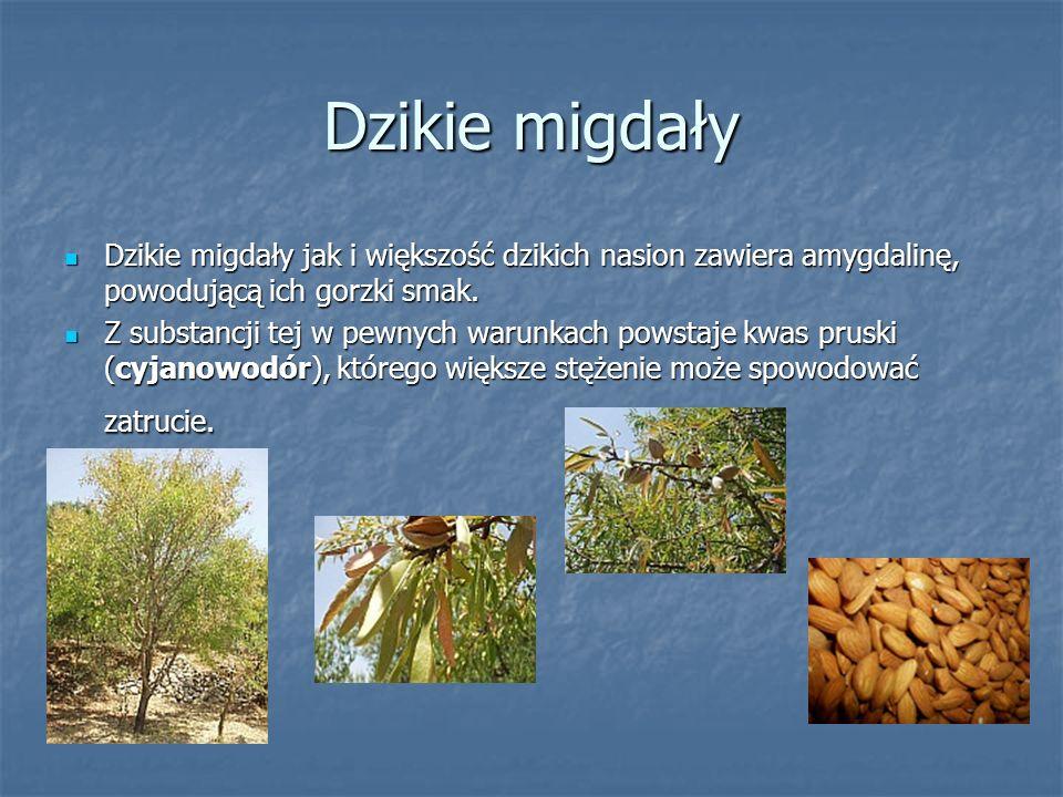 Dzikie migdały Dzikie migdały jak i większość dzikich nasion zawiera amygdalinę, powodującą ich gorzki smak.
