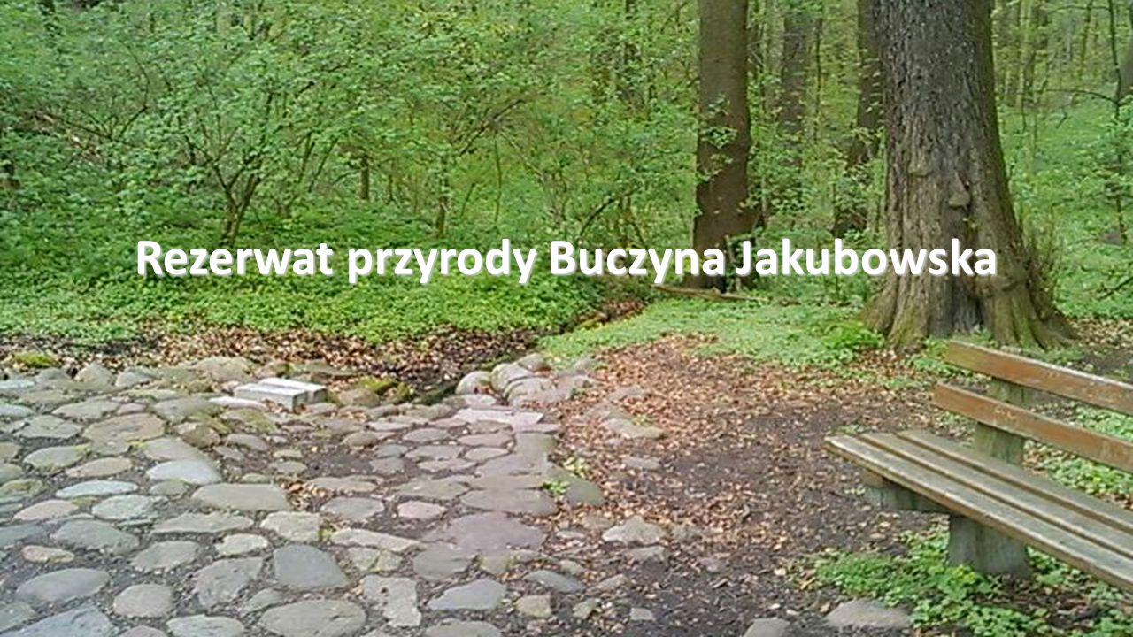 Rezerwat przyrody Buczyna Jakubowska