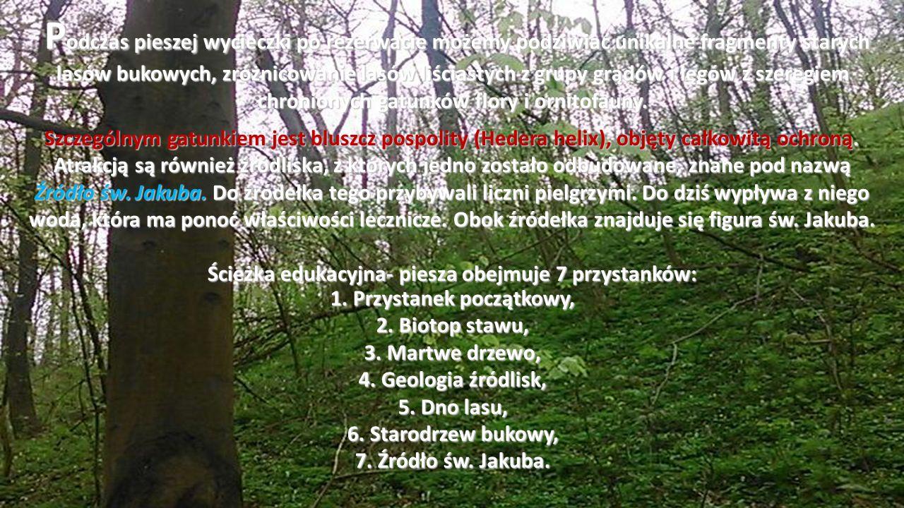 P odczas pieszej wycieczki po rezerwacie możemy podziwiać unikalne fragmenty starych lasów bukowych, zróżnicowanie lasów liściastych z grupy grądów i łęgów z szeregiem chronionych gatunków flory i ornitofauny.