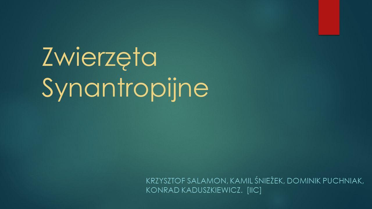 Gatunek synantropijny - gatunek zwierzęcia lub rośliny, który przystosował się do życia w środowisku silnie przekształconym przez człowieka, związanym z miejscem zamieszkania człowieka lub z jego działalnością.